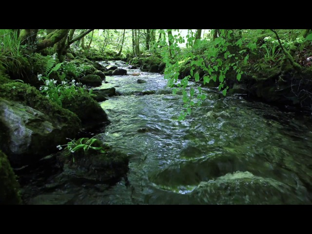 Nature Sounds of a Forest for Relaxing-Natural Soothing Sound of a Waterfall Bird Sounds