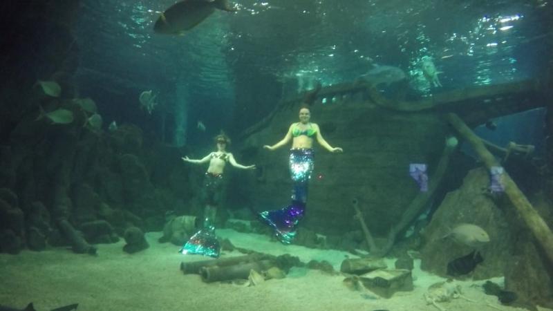 Шоу Подводный мир с участием русалок в океанариуме SDWA Сочи