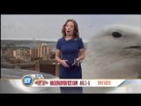 When A Giant Seagull Bombards Your Weather Report