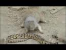 Белочка пришла к змее