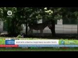 Зоопарк Алматы задолжал 46 млн тенге