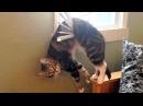 Милые и СМЕШНЫЕ животные, приколы/Funny Animal vines compilation, cute video