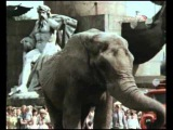 Елена Дриацкая (за кадром) Розовый слон