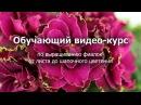 Обучающий видео курс по выращиванию фиалок от листа до шапочного цветения