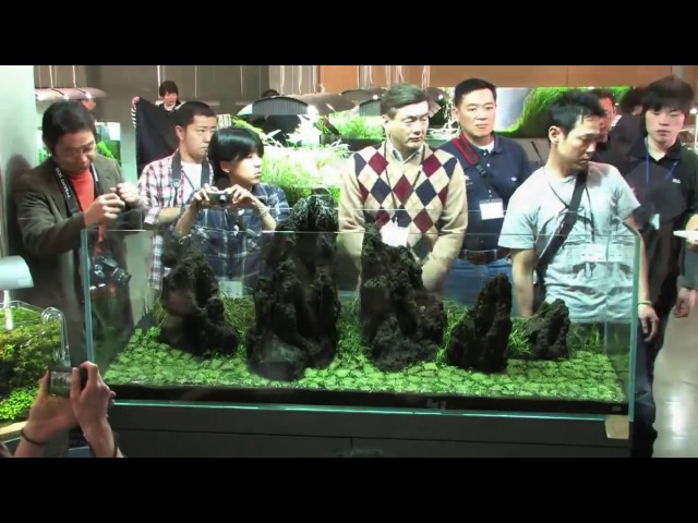 TAKASHI AMANO LAYOUT SEMINAR A 180cm aquarium tank No 4 2012 02 22