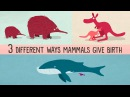 The three different ways mammals give birth Kate Slabosky