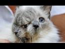 8 странных животных с ГЕНЕТИЧЕСКИМИ МУТАЦИЯМИ! Часть 1