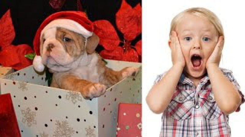 Christmas Puppy Surprise Reactions Compilation [CUTE - BEST OF]