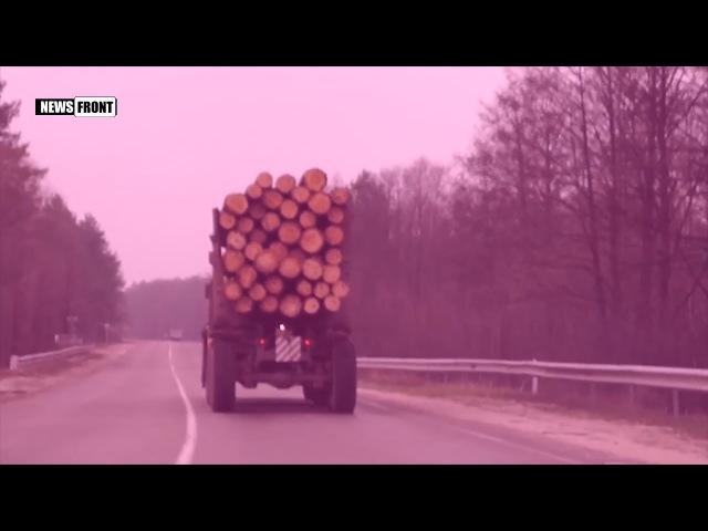 Контрабанда зараженного леса из Чернобыльской зоны