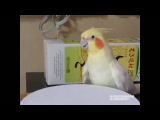 Bird goes HEAVY HARDCORE