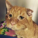 Очень грустный кот по кличке БенБен, которого никто не хотел брать из приюта, наконец-то…