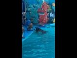 Мое первое плавание с дельфином ..❤️?