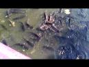 Сомы в аквапарке Siam Park Sity