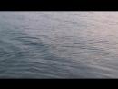Евпатория новый пляж - Дельфин