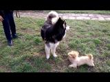 Слон и моська))) (Джесси и Арчи)