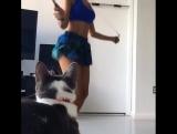 Когда даже котик засматривается на твоё подтянутое тело