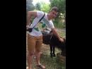 Абхазский заниженный конь