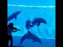 Волшебная музыка и дельфины