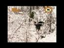 Лайка. Собака - человек. Из цикла Охота и рыбалка в Якутии