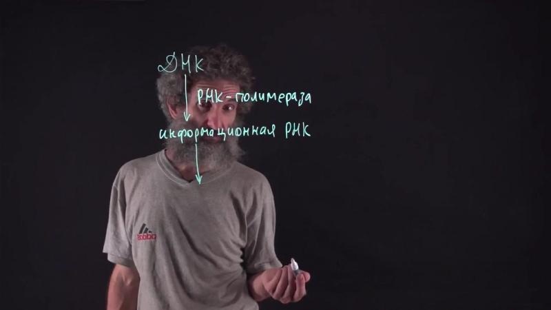 Цитология. Лекция 28. Передача информации в клетке » Freewka.com - Смотреть онлайн в хорощем качестве