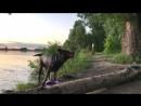 мокрая собака - счастливая собака