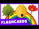 Learn Nature Vocabulary   Talking Flashcards