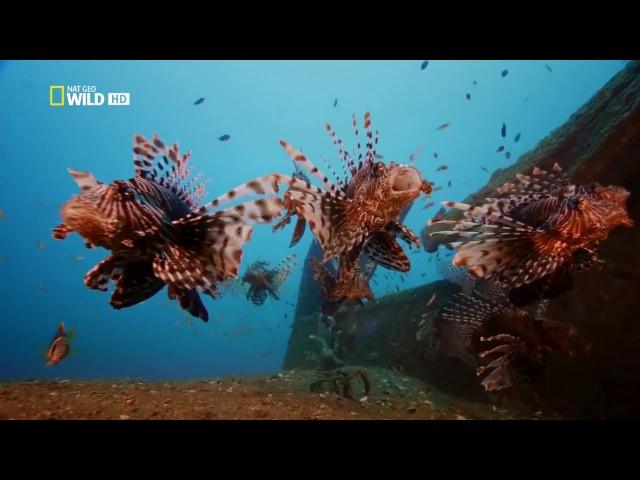 Дикая Шри Ланка. Облачный лес (документальный фильм) [HD]