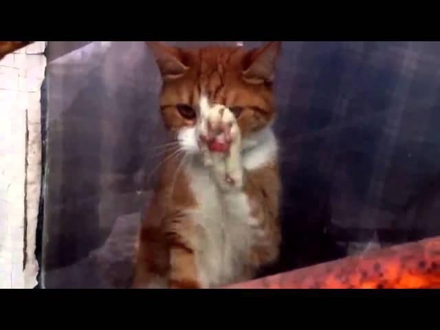 Грустный рыжий кот за окном