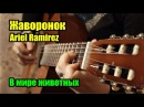 Жаворонок В мире животных - Ariel Ramirez - la peregrinación На гитаре разбор