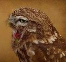 Теперь вы видели как выглядит язык у совы. Я не знаю, зачем вам это, но можете поблагодарить…