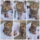 Кот вернулся с 21 часовой прогулки и застал хозяина за расклейкой объявлений о его пропаже