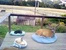 Владелец дома сказал, что олень приходит каждый день, поэтому мы сделали кровать и для него.