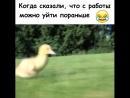 Беги Вася, беги!