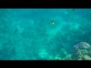 Подводный мир Красного моря, ч. 3