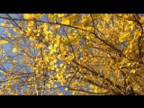Зима сменяет осень. Погода не постоянна. Из золота в серебро. Каждый застал этот момент, но вспомните ли вы как это было?