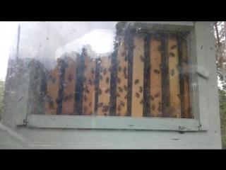 пчелы в зоопарке в Риме