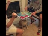 Собака по кличке Финли (Finley) принимает участие в интернет-флешмобе Mannequin Challenge.