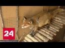 Дума собирается навести порядок в мире животных