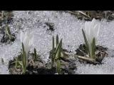 Весна...С. Рахманинов -  Рапсодия  -S. Rachmaninov  - Rhapsody On A Theme Of Paganini Op  43 Var  18