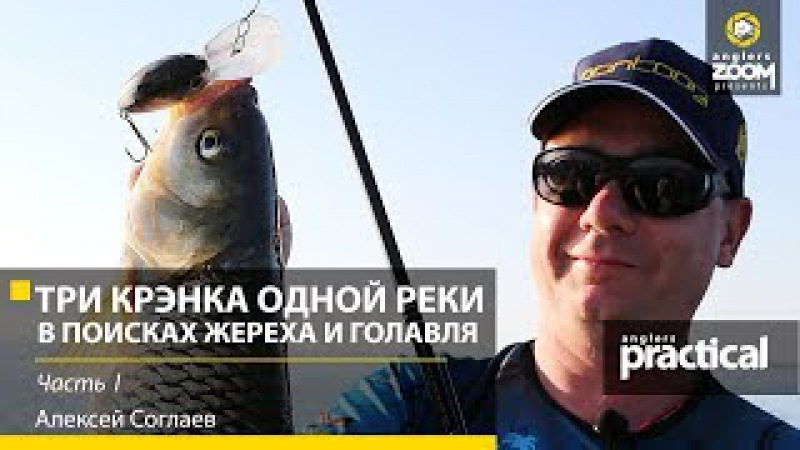 Три крэнка одной реки. В поисках жереха и голавля. Алексей Соглаев. 1 часть. Anglers Pra...