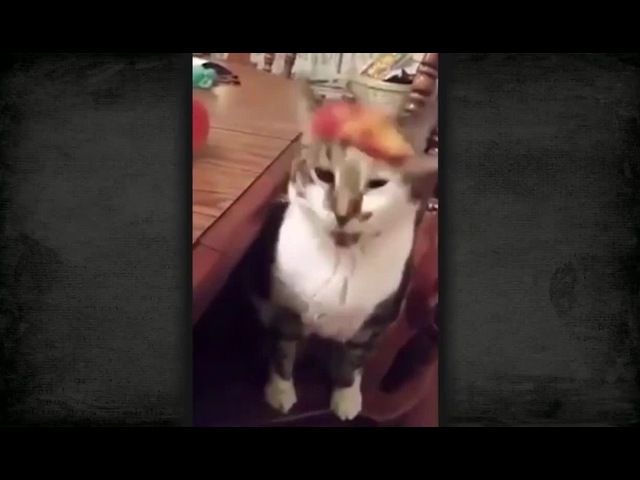 кот блюет the cat sniffs the food and burps