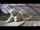 Aurora's Cubs Explore Outside the Den