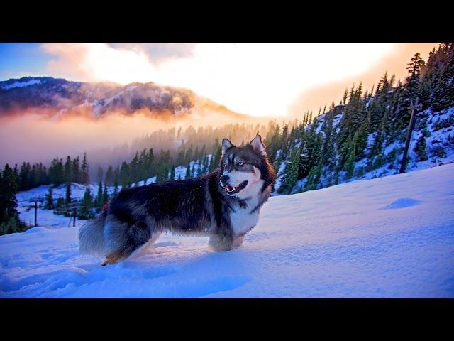 🌍Природа от которой захватывает Дух 4к | Best Nature beautiful Ultra HD 4k