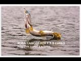 В Карелии на озере Юляярви щука кинулась на рыбака-оператора