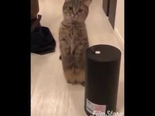 Купили увлажнитель воздуха кота не слышно третий час