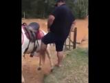 Лошадь, которая не любила толстых