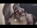Собака впала в глубокую депрессию после того, как хозяева сдали ее в приют