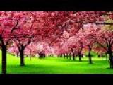 Божье Прикосновение - Я преклоняюсь (христианские песни)  (христианские исполнители)