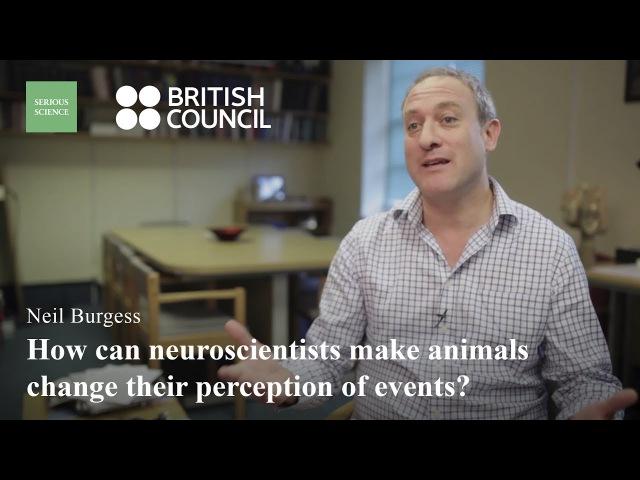 Нейробиолог Нил Берджесс об истоках нейронаук, использовании препаратов в клинической психологии и революции в молекулярной биологии