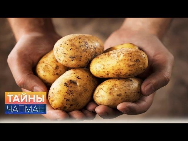 Тайны Чапман. Жареное проклятье Майя (11.08.2017) HD
